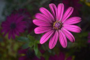 花屋の片隅で忘れ去られていたような花を買って帰ったら